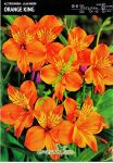 alstroemeria-orange-king-1-kus-promotion!!!.jpg