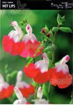 salvia-hot-lips-1-kus.jpg