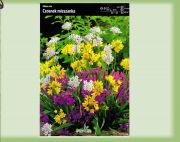 allium-roseum-cesnek-mix-10-kusu-promotion!!!.jpg