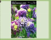 aquilegia-orlicek-double-dark-blue-white-1-kus-promotion!!!.jpg