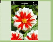 dahlia-dahlia-fire-and-ice-1-kus.jpg