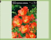 frezie-single-cervena-10-kusu-promotion!!!.jpg
