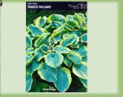hosta-francess-williams-1-kus-promotion!!!.jpg