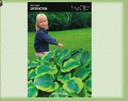 hosta-satisfaction-1-kus-promotion!!!.jpg