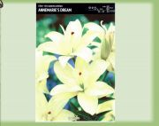 lilium-asie-lily-double-dream-annemarie-1-kus.jpg