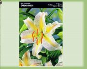 low-oriental-lily-garden-party-1-kus.jpg