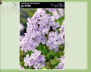 phlox-all-in-one-1-kus.jpg